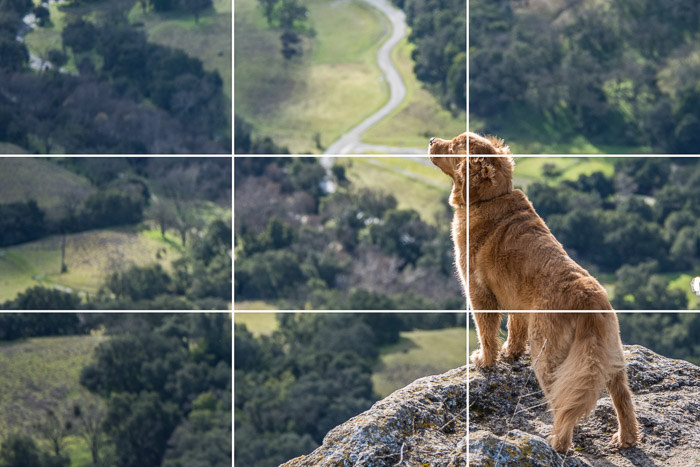 Majestic photo of a Golden retriever dog standing on the edge of a cliff with the rule of thirds composition grid overlayed
